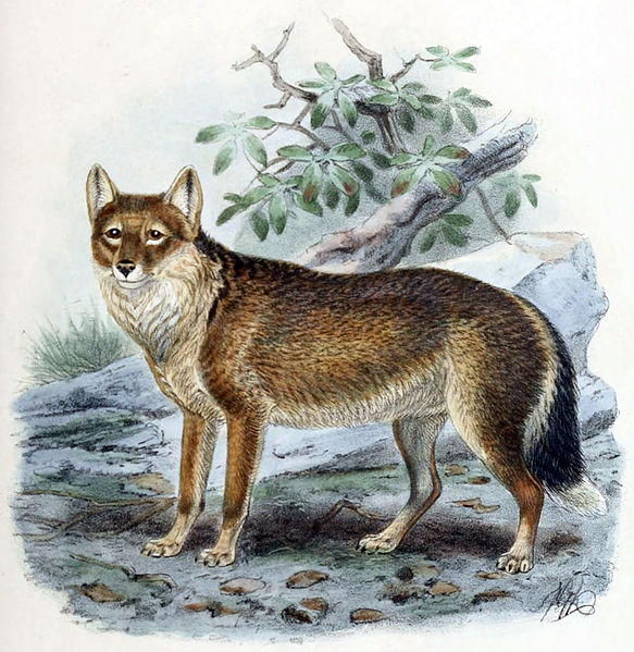 The extinct warrah is sometimes taken as evidence of pre-European discovery.